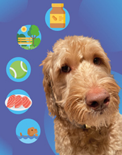 Good Boy Studios: Your Pet's Digital Identity