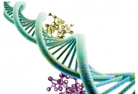 Can the Future of Digital Storage be Found in DNA?