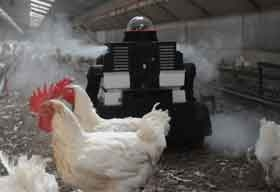 What New Technologies Must the Poultry Farming Industry Adopt?