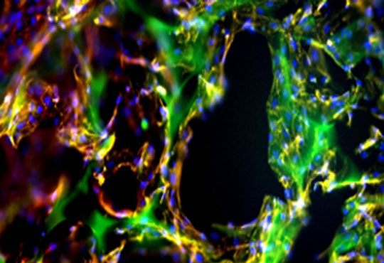 Researchers Announce New Advance in 3D Printing and Tissue Engineering Technology